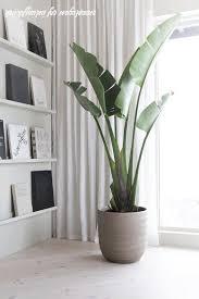 wie grünpflanzen für wohnzimmer ihren gewinn steigern können