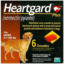 heartgard for cats heartworm treatment prevention for dogs and cats vetdepot