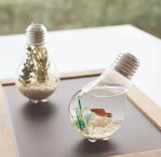 A Bright Idea Light Bulb Terrarium Upcycling Diy Project
