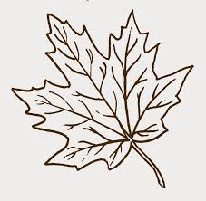Leaves clipart maple leaf 8