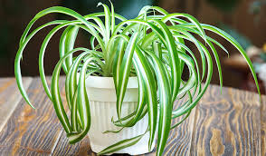 Plants For The Bathroom Feng Shui by Top 5 Bathroom Plants And Why You Should Have Them