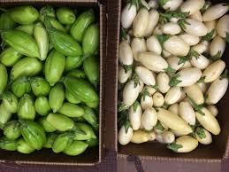 Types Of Pumpkins Grown In Uganda by Garden Egg Worldcrops