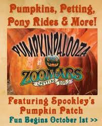 Pumpkin Patch Sacramento Groupon by 7 Best Reptile Rescue Oc Rroc Images On Pinterest And Sign
