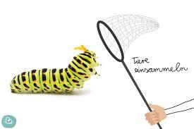 larven und raupen an der decke was tun wunderbunt de