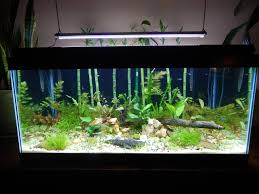 Petco Flower Ball Aquarium Decor by 34 Best Freshwater Tank Images On Pinterest Aquarium Ideas Fish
