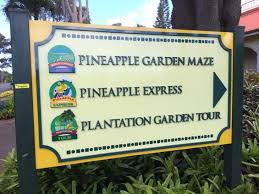 Review Dole Plantation Hawaii s Pineapple Experience Points