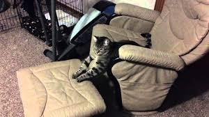 Talking Cat In Rocking Chair