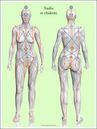 interieur corps humain femme les conséquences des épisiotomies sur la santé émotionnelle et