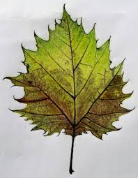 Leaf1 1