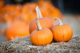 Myers Pumpkin Patch Facebook by Guide To Pumpkin Picking In Michigan I Love Halloween