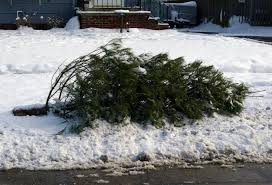 Chicago Christmas Tree Disposal