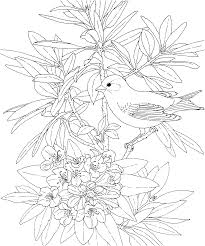 Free Printable Coloring PageWashington State Bird And Flower Goldfinch Rhododendron