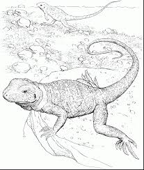 Brilliant Bearded Dragon Lizard Coloring Page With Pages And Book