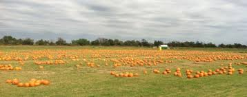Pumpkin Patch Bastrop County by 10 Great Pumpkin Patches In Texas