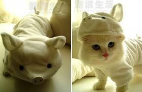costume for cat 105 cat costumes that will make you smile