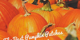 Pumpkin Patches Near Dallas Tx 2015 by The Best Pumpkin Patches In Collin County We Are Collin County