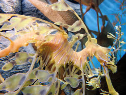 file dsc28197 leafy sea monterey bay aquarium monterey