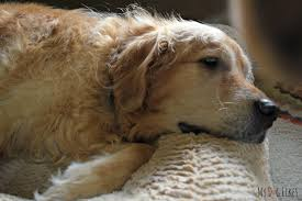 Pumpkin Causes Dog Diarrhea by What To Do When Your Dog Has Diarrhea 3 Simple Home Remedies