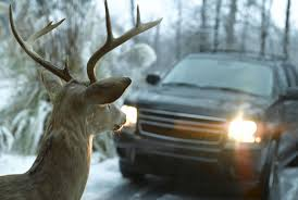 Do Car Deer Whistles Work? 3pcsset Christmas Antlers Decoration For Car Truck Costume Photos Opening Day Of Wyomings Shed Hunting Season Outdoor Life Preserving Lvet Antlers On Deer Outdoors Aberdeennewscom Elk Tracks Galore Records Set At Boy Scout Antler Auction Headed To The Lower 48 Pic Taken In Yukon Canada Youtube Lumiparty Reindeer Suv Van And Amazoncom Mystic Industries Original Vehicle With Jumbo Redbrown Auto