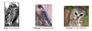 Donate To Cascades Raptor Center