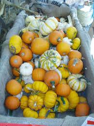 Pumpkin Patch Seattle Washington by Hunter Farms Pumpkin Patch October 1 Through October 31 Don U0027t