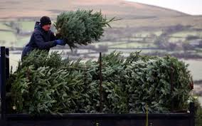 8ft Artificial Christmas Trees Uk by When Should You Put Up Your Christmas Tree And Should You Go Real