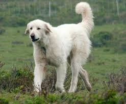 Non Shedding Dogs Large by 8 More Really Weird Dog Breeds Featured Creature