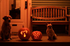Pumpkin Gave Dog Diarrhea by Ballwalkparkseattledogwalker What The Dogs Did Today To Make Me