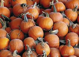 Carmichaels Pumpkin Patch Oklahoma by Your Guide To Halloween Parties Parades Pumpkin Patches And