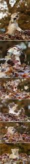 Family Guy Halloween On Spooner Street Youtube by Daily Kos John M Webb Under My Own Name