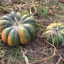 Chesterfield Berry Farm Pumpkin Patch 2015 by Lloyd Family Farms 43 Photos U0026 18 Reviews Farmers Market