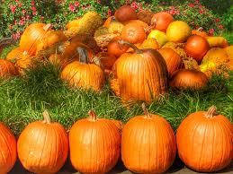 Free Pumpkin Patch In Katy Tx by Awesome Fall Things To Do In Dallas Fort Worth