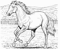 Horse Coloring Page Book