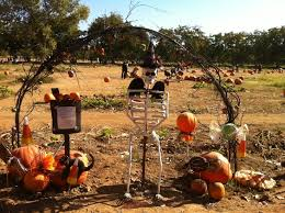 Bishops Pumpkin Patch Wheatland Ca by 24 Best Sacramento Family Scene Images On Pinterest Sacramento
