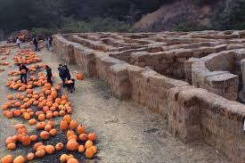 Pumpkin Patch Near Bay Area by 6 Best Pumpkin Patches In The Bay Area