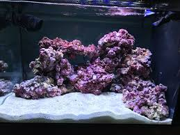 First Saltwater Tank Aquascape - Aquascaping Forum - Nano-Reef.com ... Is This Aquascape Ok Aquarium Advice Forum Community Reefcleaners Rock Aquascaping Contest Live Rocks In Your Saltwater Post Your Modern Aquascape Reef Central Online There A Science To Live Rock Sanctuary 90 Gallon Build Update 9 Youtube Page 3 The Tank Show Skills 16 How Care What Makes Great Large Custom Living Coral Aquariums Nyc