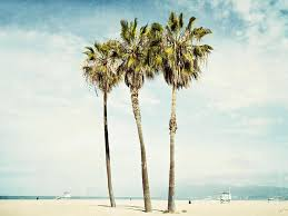 Palm Trees Tumblr Vertical Exellent California Photograph Venice Palms By Bree Madden Throughout