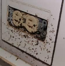 Pest Control Ants Alpine Pest Control