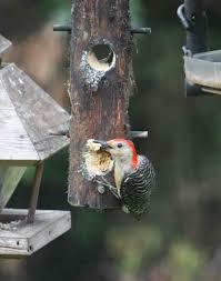 Bird feeders – Suet log