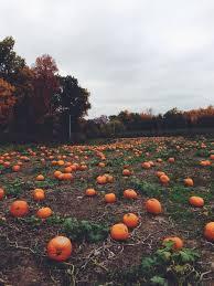 Pumpkin Patch Jacksonville Al by 409 Best Just Love Images On Pinterest