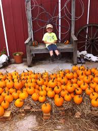 Pumpkin Patch Collins Ms by The 25 Best Pumpkin Patch Locations Ideas On Pinterest Family