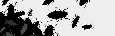 die häufigsten schädlinge