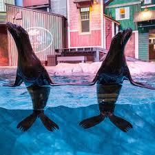 sea lions conserve aquarium