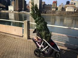 Christmas Tree Disposal Nyc 2015 by Buboblog A New York City Dad December 2013