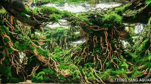 Best Aquascape Contest IIAC 2016 - YouTube Aquascape Of The Month June 2015 Himalayan Forest Aquascaping Interesting Driftwood Placement Aquascapes Pinterest About The Greener Side Aquascaping Design Checklist Planted Tank Forum Simons Blog Decoration Bring Nature Inside Home Ideas Downhill By Arie Raditya Aquarium 258232 Aquaria Creating With Earth Water Fire Air Space New Aquascapemarch 13 2016page 14 Page 8 Aquapetzcom Magical Youtube 386 Best Tank Images On Aquascape