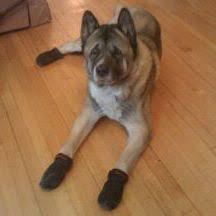 booties for hardwood floors