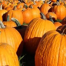 Pumpkin Picking Near Lancaster Pa by Grim U0027s Greenhouse U0026 Farm Market 29 Photos U0026 29 Reviews Pick