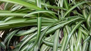 plantes vertes d interieur quelles plantes d intérieur choisir pour une pièce peu éclairée