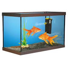 aquarium poisson prix prix aquarium poisson poisson naturel
