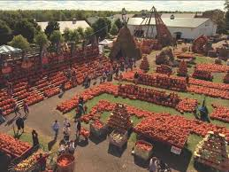 Sunny Side Pumpkin Patch Hours by 5 Over The Top Pumpkin Displays To Visit This Fall Fn Dish